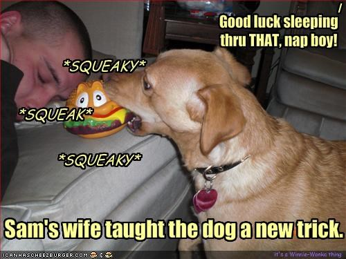 Sam's wife taught the dog a new trick.