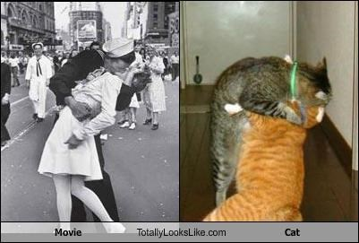 Movie Totally Looks Like Cat