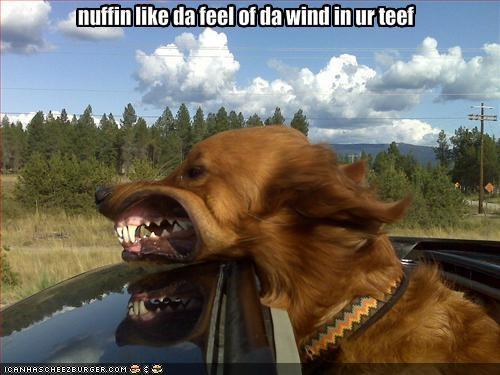 nuffin like da feel of da wind in ur teef