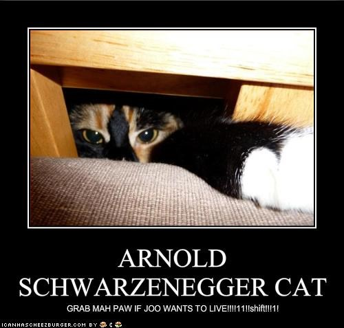 ARNOLD SCHWARZENEGGER CAT