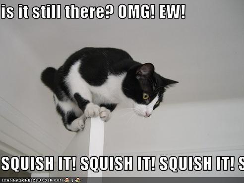 is it still there? OMG! EW!  SQUISH IT! SQUISH IT! SQUISH IT! SQUISH IT! SQUISH IT! SQUISH IT! SQUISH IT!