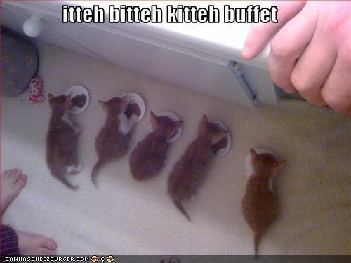 itteh bitteh kitteh buffet