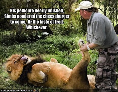 His pedicure nearly finished, Simba pondered the cheeseburger to come.  Or the taste of Fred. 