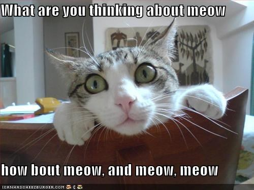 What are you thinking about meow  how bout meow, and meow, meow