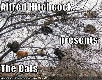 Alfred Hitchcock  presents The Cats