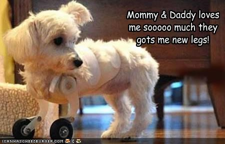 Mommy & Daddy loves me sooooo much they gots me new legs!