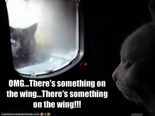 OMG...There's something on the wing...There's something on the wing!!!