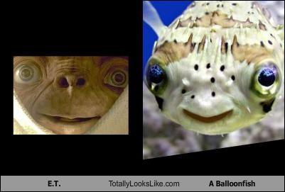 E.T. Totally Looks Like A Balloonfish