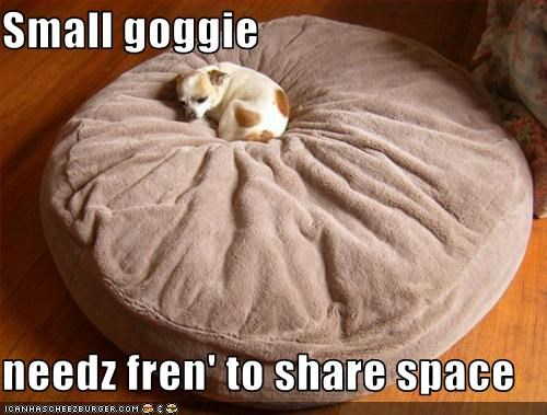 Small goggie  needz fren' to share space