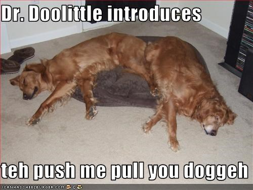 Dr. Doolittle introduces  teh push me pull you doggeh