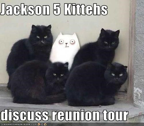 Jackson 5 Kittehs  discuss reunion tour