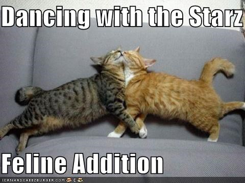 Dancing with the Starz  Feline Addition