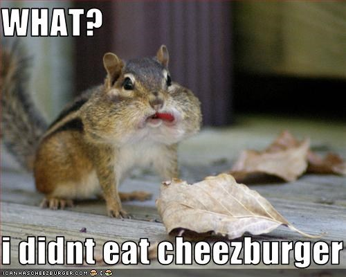 WHAT?  i didnt eat cheezburger