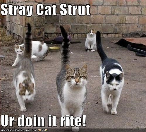 Stray Cat Strut  Ur doin it rite!
