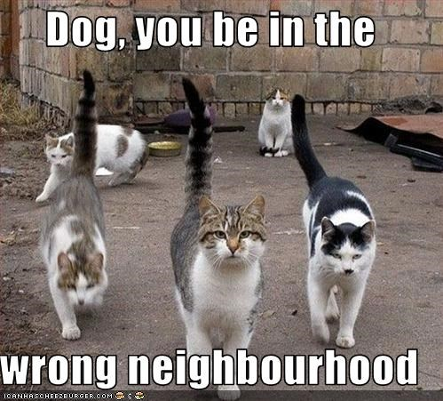 Dog, you be in the   wrong neighbourhood