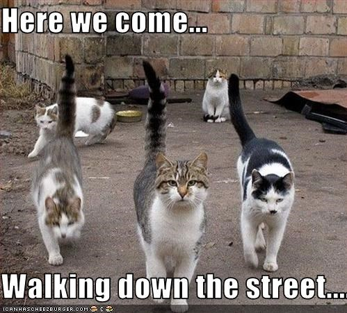 Here we come...  Walking down the street......