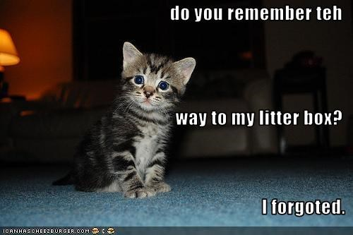 do you remember teh  way to my litter box? I forgoted.