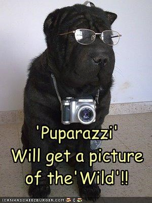 'Puparazzi'  Will get a picture of the'Wild'!!