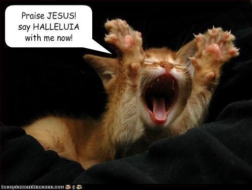 praise jesus halleluia southern baptist cat