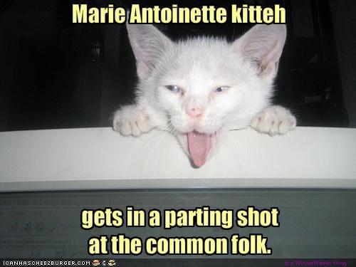 Marie Antoinette kitteh