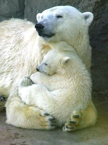Animal Mamas and Their Babies Teach You About Snuggling
