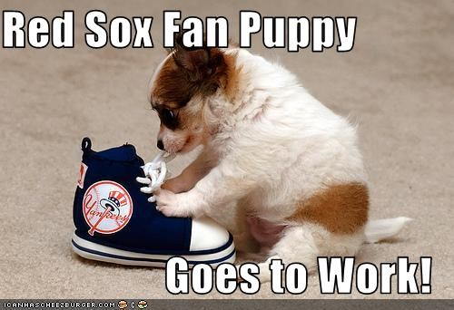 Red Sox Fan Puppy  Goes to Work!