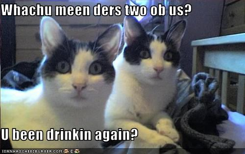 Whachu meen ders two ob us?  U been drinkin again?