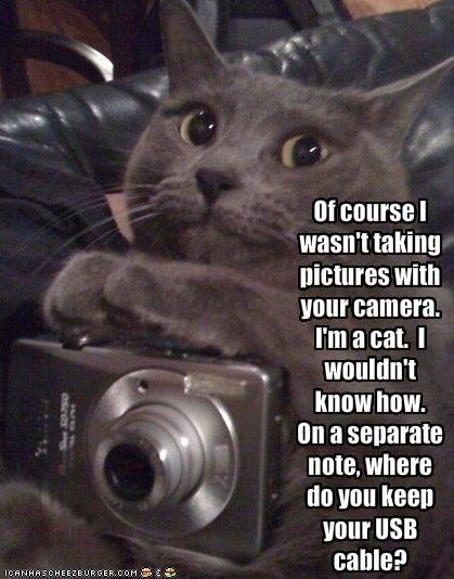 Of course I wasn't taking pictures with your camera.  I'm a cat.  I wouldn't know how.