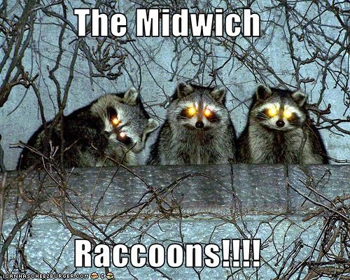 The Midwich  Raccoons!!!!