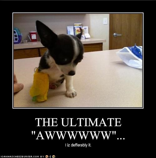 "THE ULTIMATE ""AWWWWWW""..."