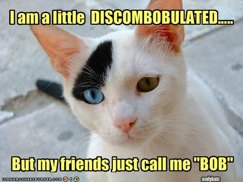 I am a little  DISCOMBOBULATED.....