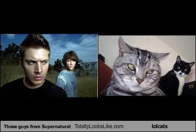 Those guys from Supernatural Totally Looks Like lolcats
