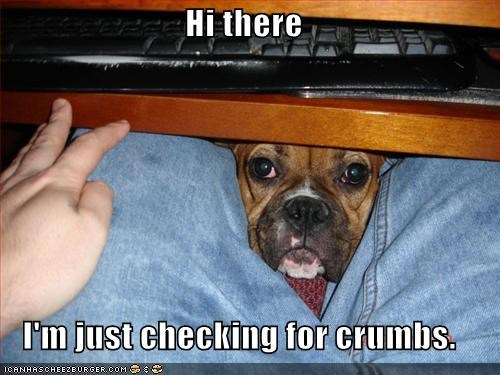 Hi there  I'm just checking for crumbs.