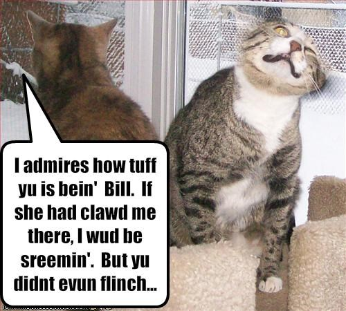 I admires how tuff yu is bein'  Bill.  If she had clawd me there, I wud be sreemin'.  But yu didnt evun flinch...