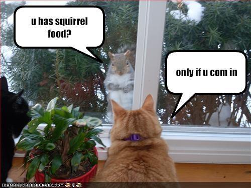 fud,lolsquirrels,murder,plotting