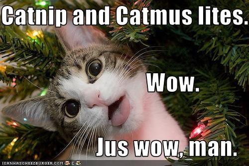 Catnip and Catmus lites.                                Wow. Jus wow, man.