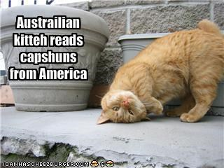 Austrailian kitteh reads capshuns from America