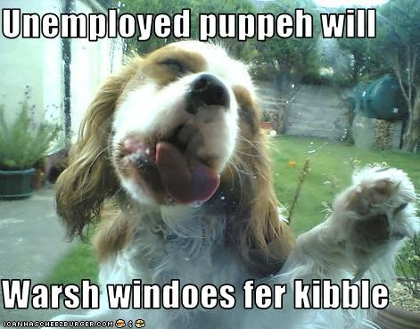 Unemployed puppeh will  Warsh windoes fer kibble