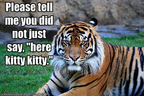 "Please tell me you did not just say, ""here kitty kitty."""