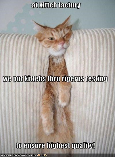 at kitteh factury we put kittehs thru rigerus testing to ensure highest quality!