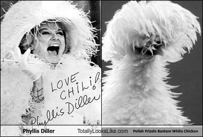Phyllis Diller Totally Looks Like Polish Frizzle Bantam White Chicken