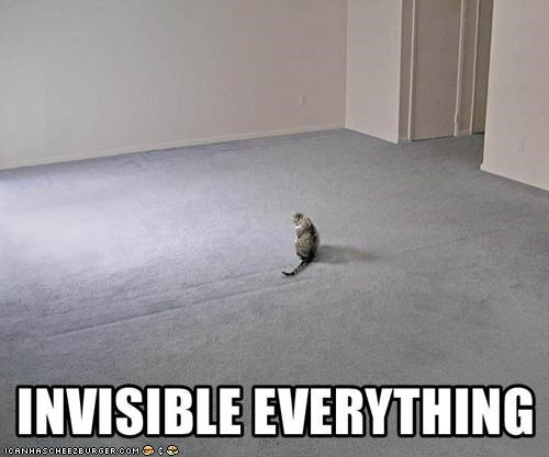 awesome,everything,invisible,lol,lolcat