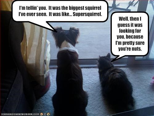 I'm tellin' you.  It was the biggest squirrel I've ever seen.  It was like... Supersquirrel.