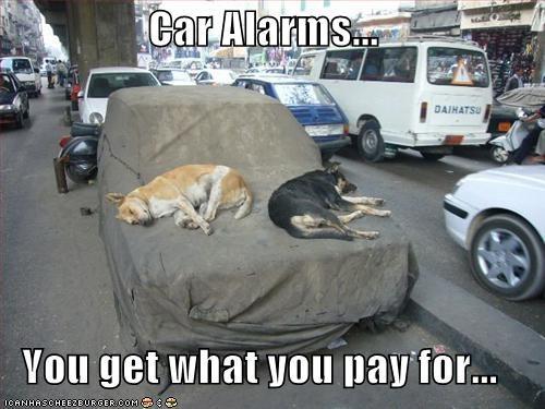 alarms,cars,german shepherd,guard dog,sleeping,whatbreed