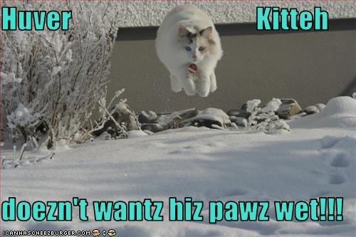 Huver                                 Kitteh              doezn't wantz hiz pawz wet!!!
