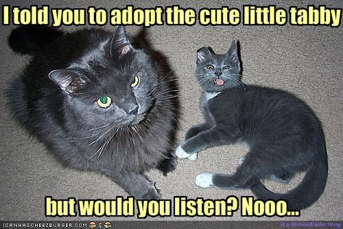 I told you to adopt the cute little tabby