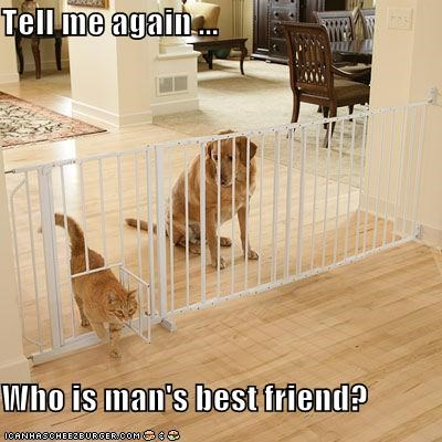 Tell me again ...  Who is man's best friend?
