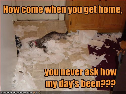 destruction,mess,mischief,paper towels,questions