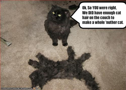 Ok, So YOU were right,