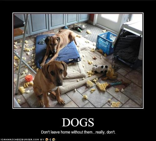 bad dog,bed,destruction,mess,Pillow,whatbreed